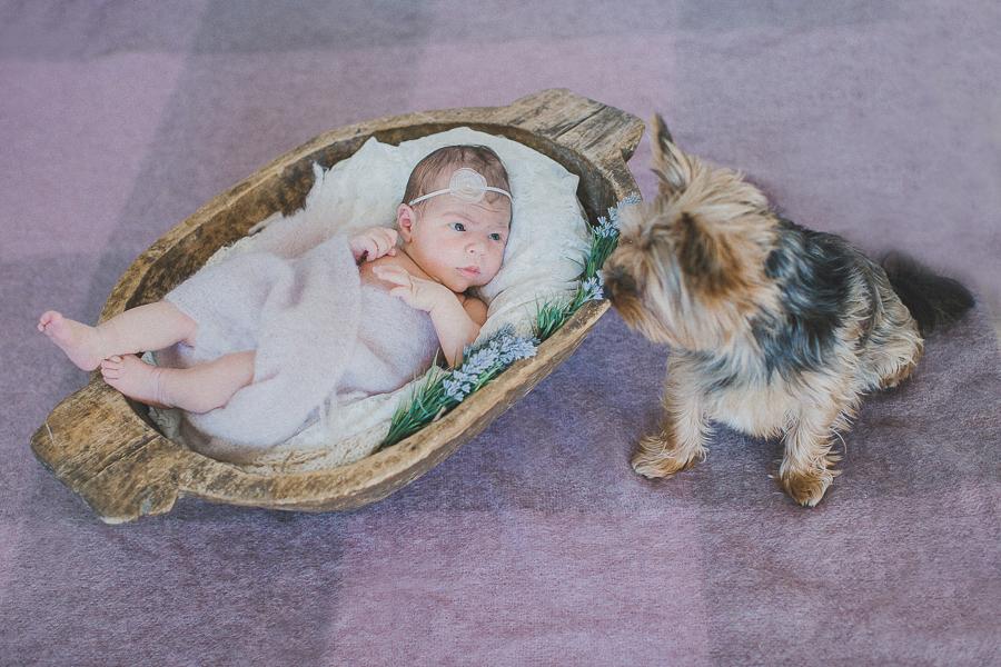 Babyshooting-mit-Familienhund-von-Simone-Bauer-Photografie